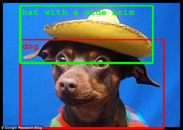hund med hatt