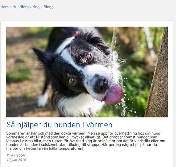 hundbloggen